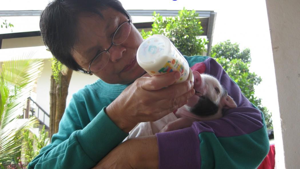 PBS Piglet Surgery 2010-02-17 (16)a